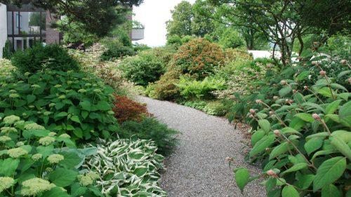 Gartengestaltung-Hortensie-Pinie-Amelanchier