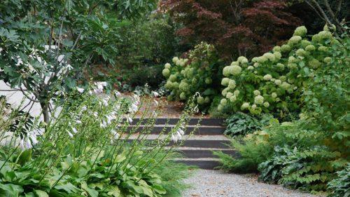 Gartengestaltung-Hosta-Hortensie-Feige