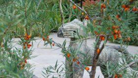 Gartengestaltung-Sanddorn-Kunst