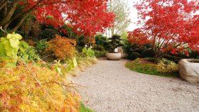 Herbst-Färbung-Ahorn-Kies-Brunnen-neu