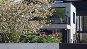 neu_15_Amelanchier-Gartengestaltung